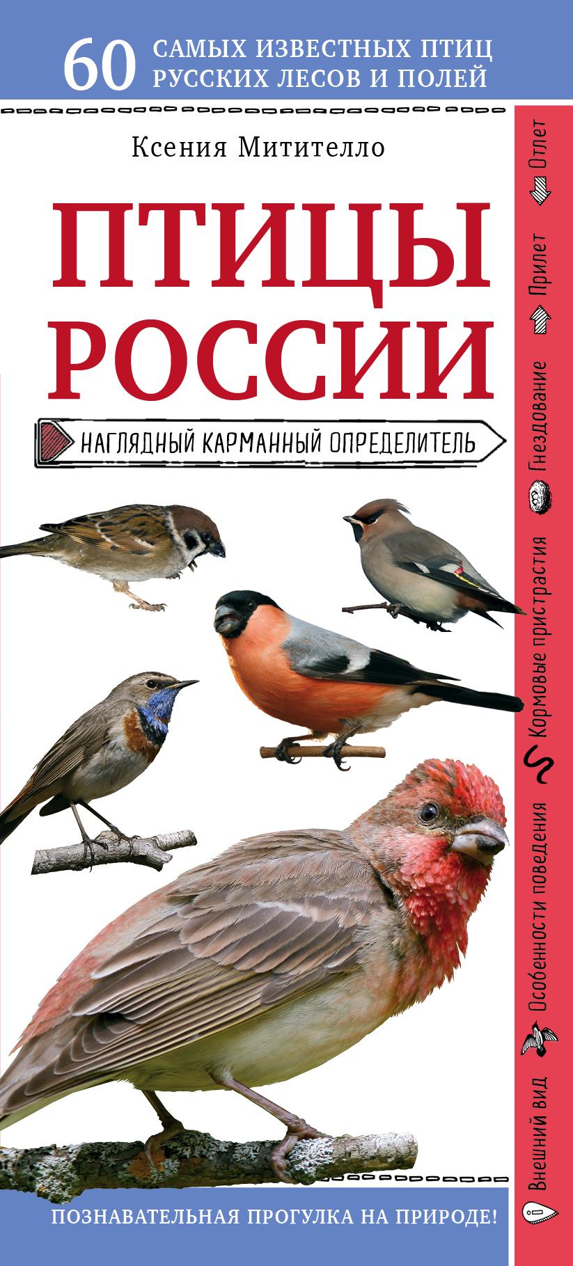Купить книгу Птицы России. Наглядный карманный определитель, автора Ксении Митителло