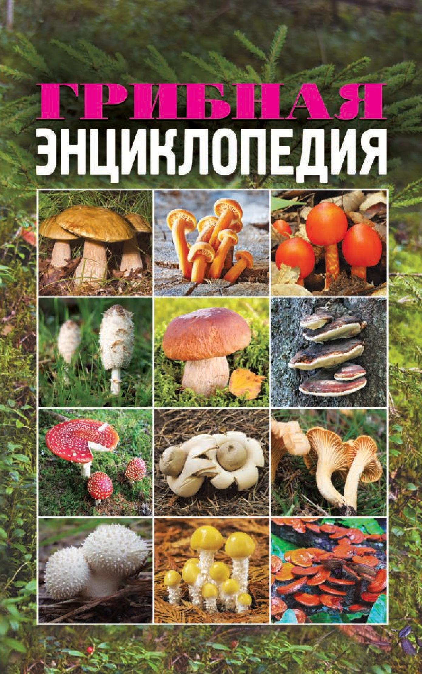 Купить книгу Грибная энциклопедия, автора Татьяны Лагутиной