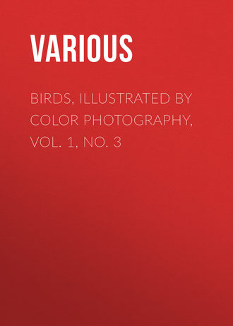 Купить Birds, Illustrated by Color Photography, Vol. 1, No. 3