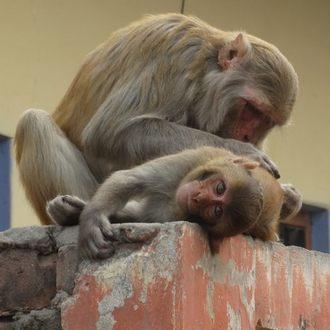 Аудиокнига Про царя обезьян