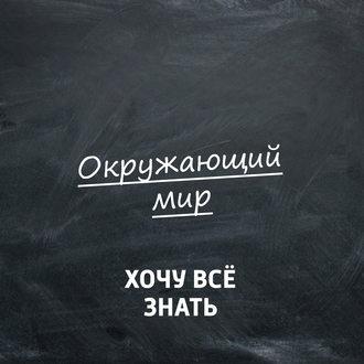 Аудиокнига Мир глазами сокола-сапсана
