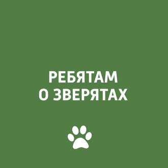 Аудиокнига Собаки зимой