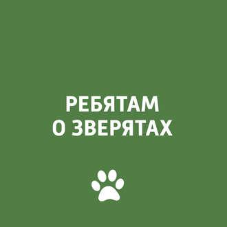 Аудиокнига Психология собаки