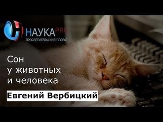 Аудиокнига Сон животных и человека