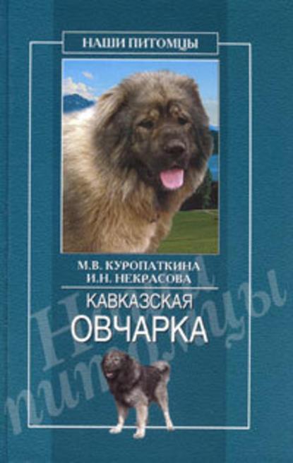 Купить Кавказская овчарка по цене 671, смотреть фото