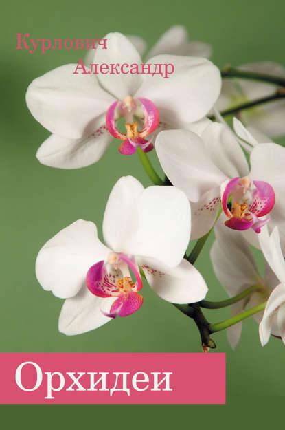 Купить Орхидеи по цене 493, смотреть фото