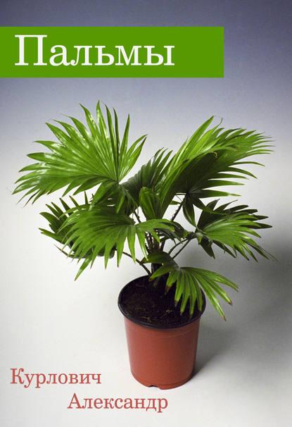 Купить Пальмы по цене 554, смотреть фото