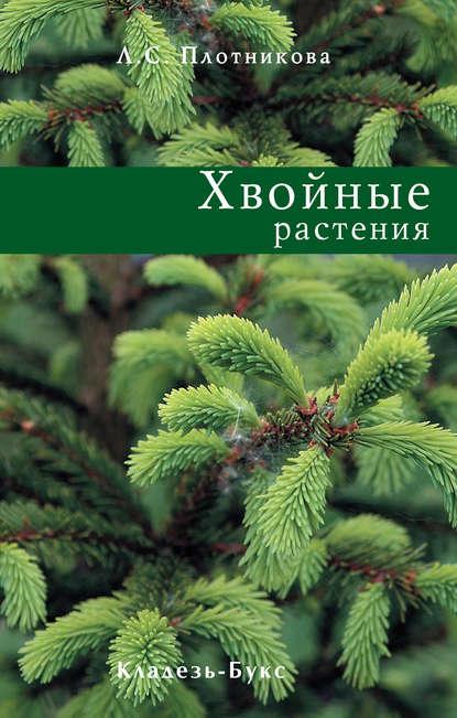 Купить Хвойные растения по цене 448, смотреть фото