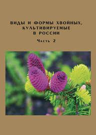 Виды и формы хвойных, культивируемые в России. Часть 2. Picea A. Dietr., Thuja L.
