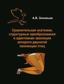 Сравнительная анатомия, структурные преобразования и адаптивная эволюция аппарата двуногой локомоции птиц