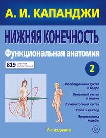 Нижняя конечность. Функциональная анатомия