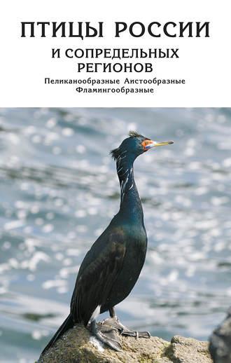 Птицы России и сопредельных регионов. Пеликанообразные, Аистообразные, Фламингообразные